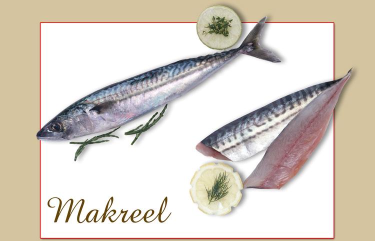 makreel-groot