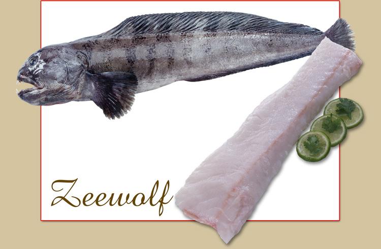 zeewolf-big